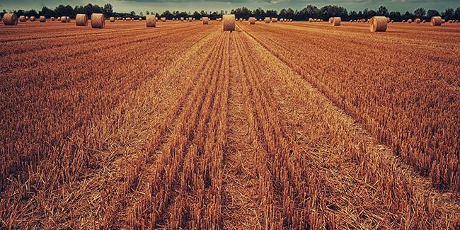 field-3186902_1920